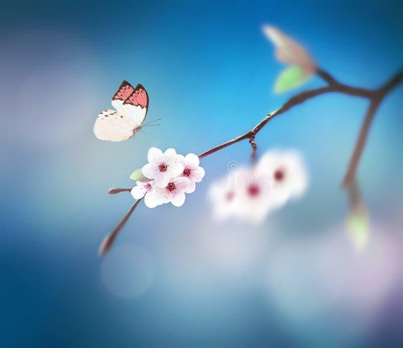 Schöner Schmetterling auf weißer Blume, Himmelhintergrund stockbild