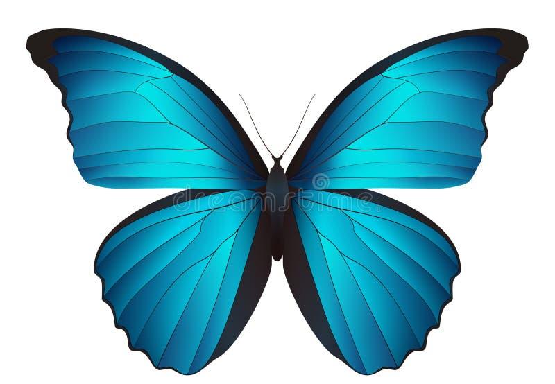Schöner Schmetterling lokalisiert auf einem weißen Hintergrund stock abbildung