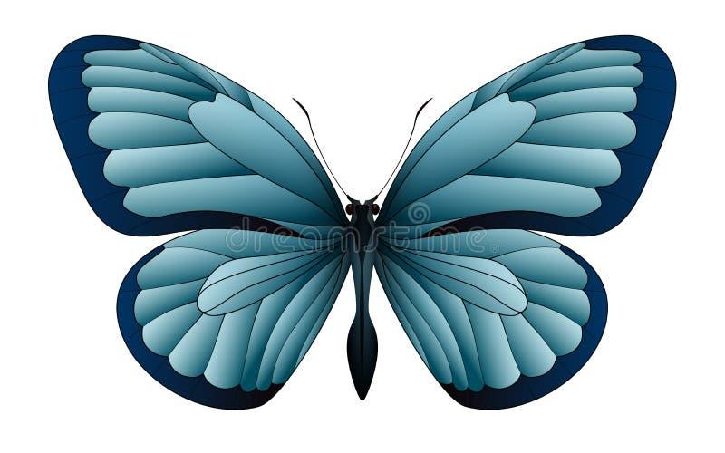 Schöner Schmetterling lokalisiert auf einem weißen Hintergrund lizenzfreie abbildung