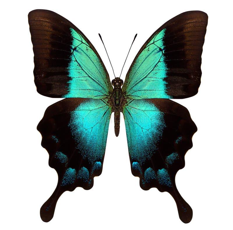 Schöner Schmetterling lokalisiert auf Weiß lizenzfreies stockfoto