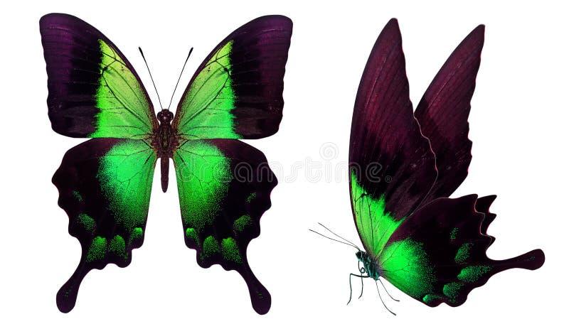 Schöner Schmetterling lokalisiert auf Weiß lizenzfreie stockfotos