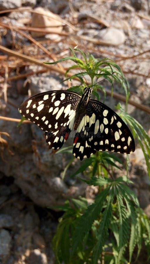Schöner Schmetterlings- und Hanfbaum lizenzfreie stockbilder