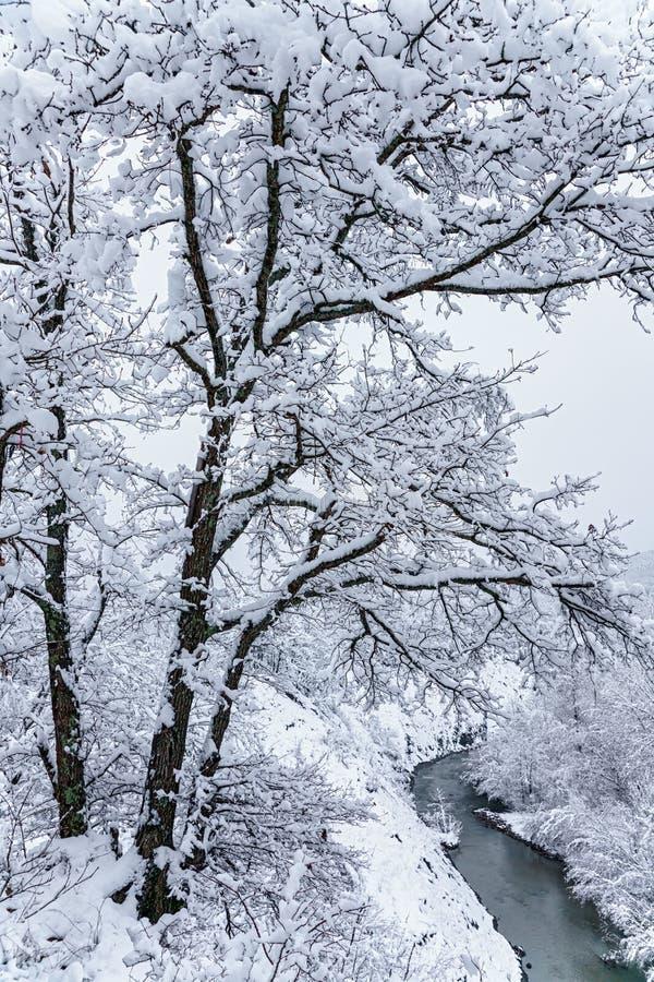 Schöner schneebedeckter Gebirgswald und AFIPS-Fluss Bewölkte szenische Winterlandschaft West-Kaukasus vertikale Landschaft lizenzfreies stockbild