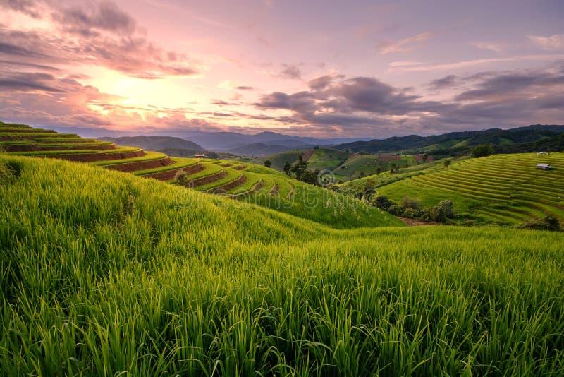 Schöner Schritt des Reisterrassen-Paddelfeldes im Sonnenuntergang bei Chiangm stockfotografie