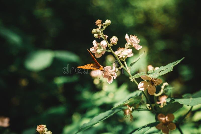 Schöner Schuss einer blühenden Pflanze in einem Wald mit einem trinkenden Nektar des Schmetterlinges von ihm in einem Wald lizenzfreie stockbilder