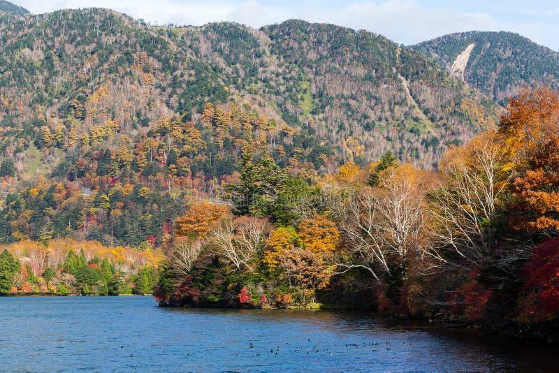 Schöner See im Herbst stockfoto