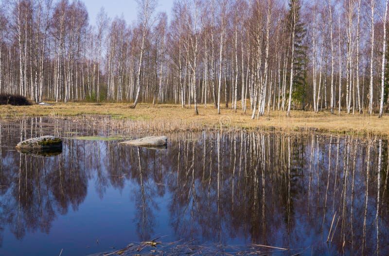 Schöner See im Wald mit zwei großen Flusssteinen lizenzfreies stockfoto