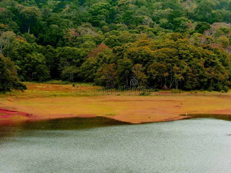 Schöner See-und Baum-Hintergrund stockfotografie