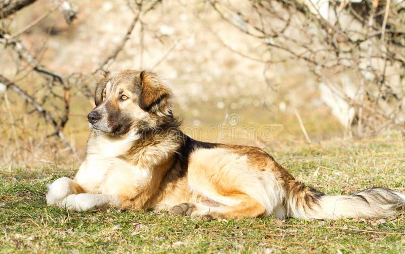 Schöner sitzender Hund stockfoto