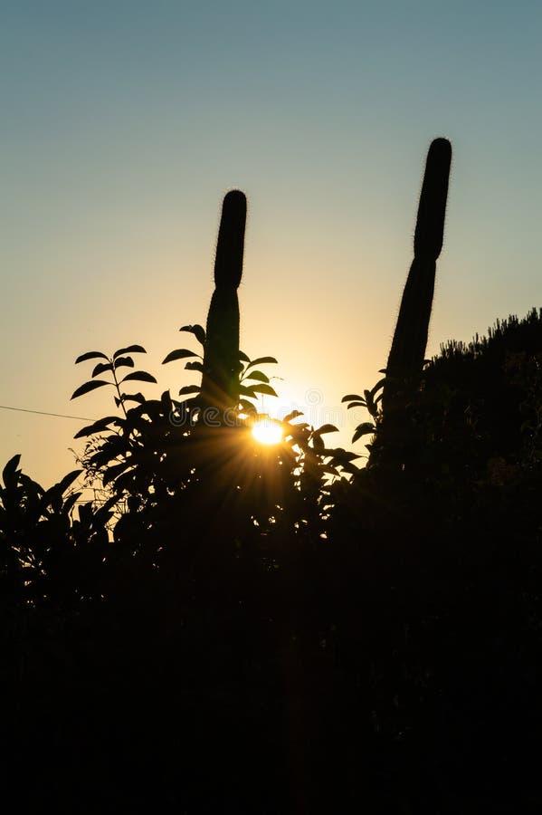 Schöner Sommer-Sonnenuntergang mit einem Kaktus-Schattenbild, Sizilien, Italien, Europa lizenzfreies stockfoto