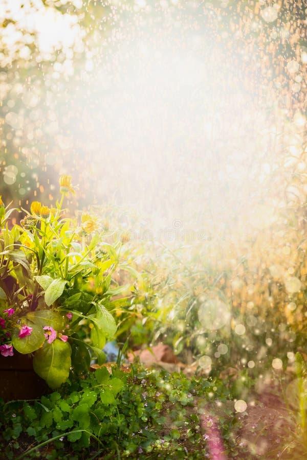 Schöner Sommerblumengarten-Naturhintergrund mit Calendulablumenbeet stockfotografie