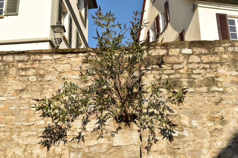 Schöner sonderbarer Baum lizenzfreie stockfotografie