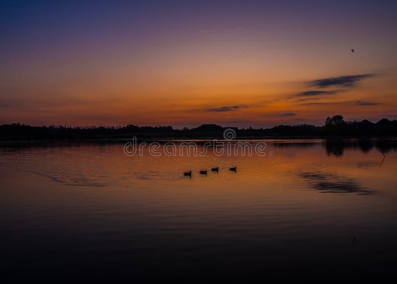 Schöner Sonnenaufgang mit Enten am Furzton-See, Milton Keynes lizenzfreie stockfotografie
