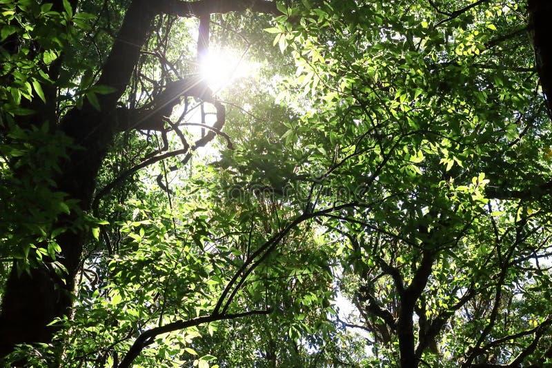 Schöner Sonnenstrahl im tropischen Regenwald in Kew Mae Pan, Chaing MAI, Thailand lizenzfreie stockbilder