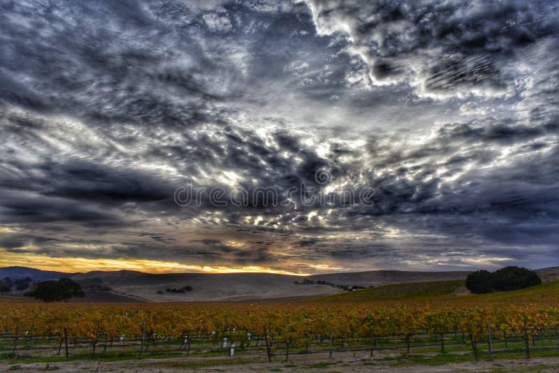 Schöner Sonnenuntergang über der Landschaft von Wein vinyards stockfotos
