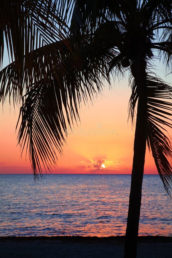 Schöner Sonnenuntergang auf dem Strand, Sonne geht unten zum Meer Palme auf dem bayshore Ruhe umgebend, Erholungskonzept betäuben lizenzfreies stockbild