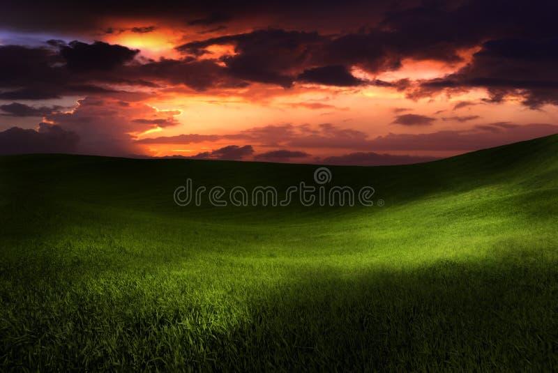 Schöner Sonnenuntergang auf einer grünen Wiese lizenzfreies stockfoto
