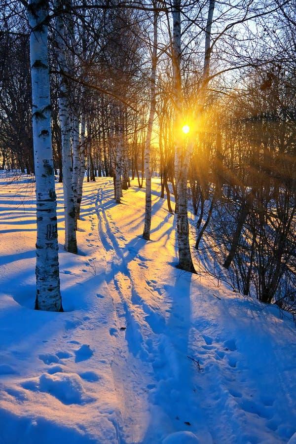 Schöner Sonnenuntergang in einem Winterpark stockfotos