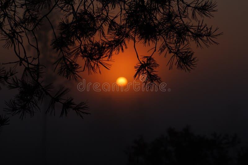 Schöner Sonnenuntergang im Wald die bezaubernde Schönheit der Natur lizenzfreies stockfoto