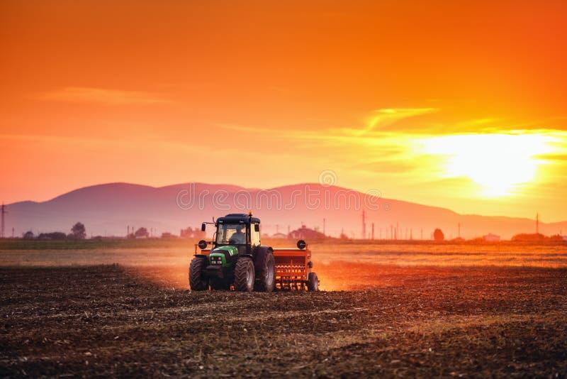 Schöner Sonnenuntergang, Landwirt im Traktor, der Land mit Saatbeet vorbereitet stockfotografie