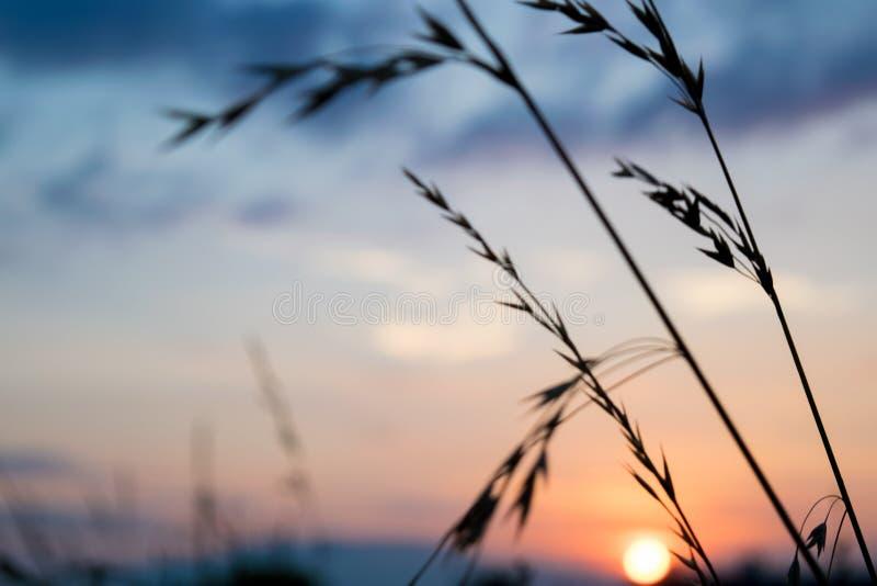 Schöner Sonnenuntergang mit blauem Himmel lizenzfreies stockfoto