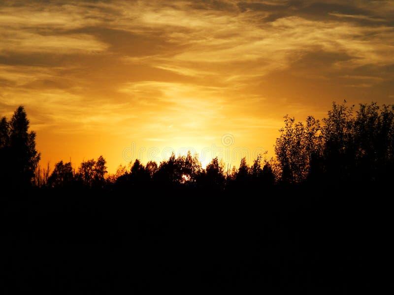 Schöner Sonnenuntergang mit blauem Himmel und Bäumen lizenzfreie stockfotografie
