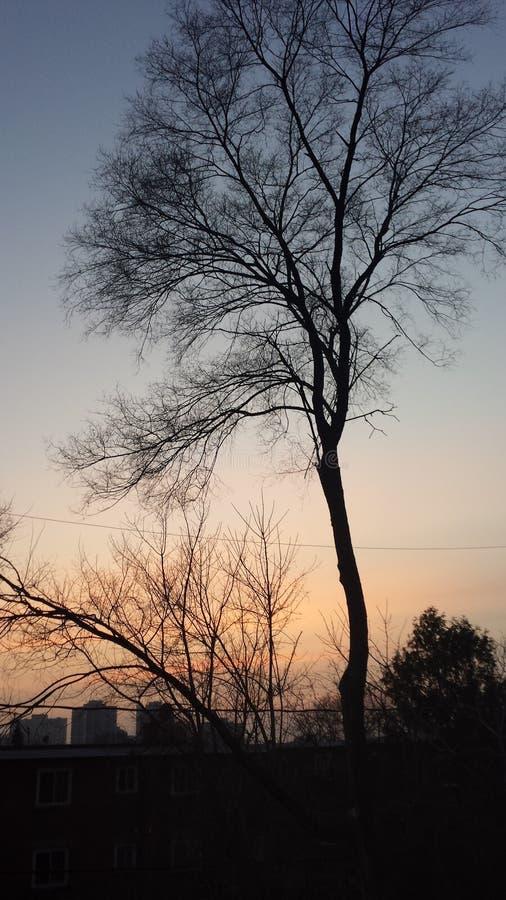 Schöner Sonnenuntergang in Ottawa lizenzfreie stockfotos