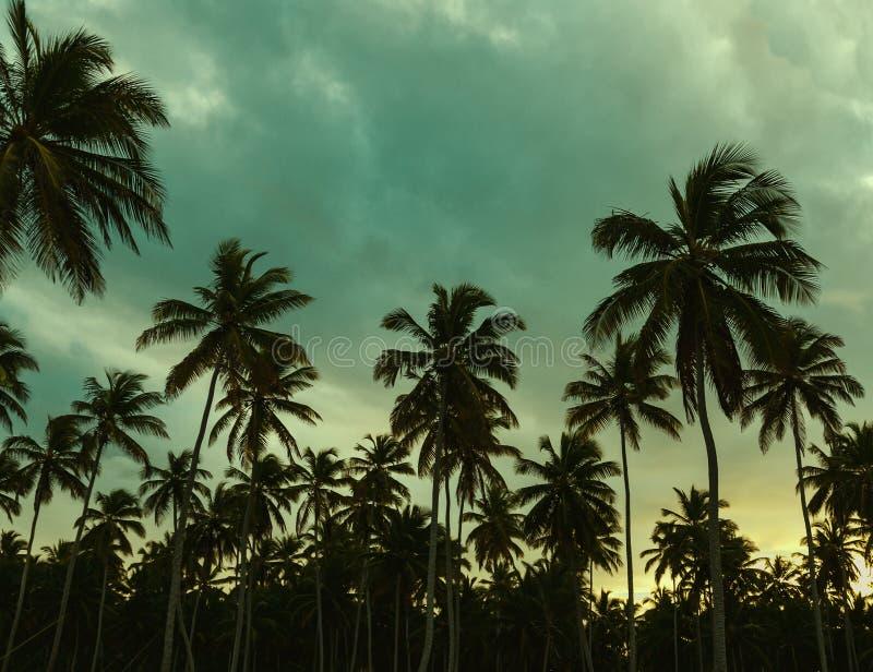 Schöner Sonnenuntergang, Palmen und Azurblaugrün lizenzfreies stockbild