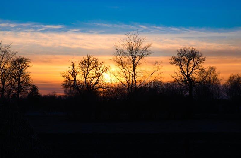 Schöner Sonnenuntergang, Schattenbilder von Bäumen gegen die untergehende Sonne stockbilder