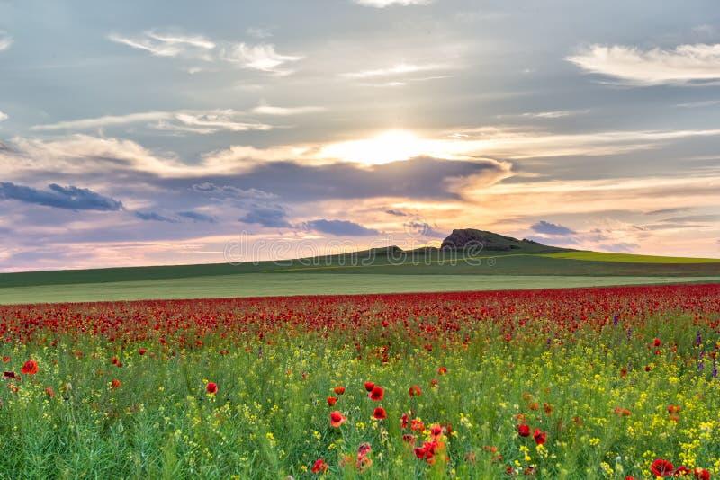 Schöner Sonnenunterganghimmel mit weißen Wolken über einem grünen Sommerfeld mit Mohnblumen stockbilder