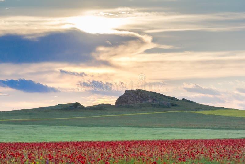 Schöner Sonnenunterganghimmel mit weißen Wolken über einem grünen Sommerfeld mit Mohnblumen stockfotografie