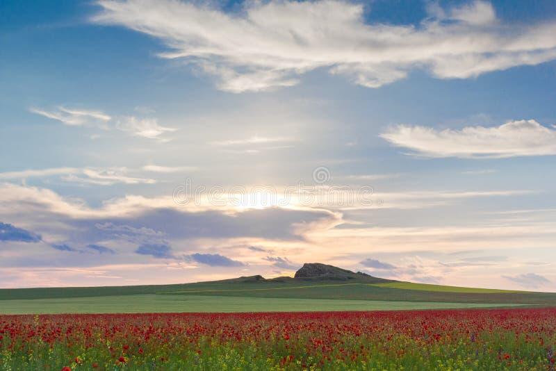 Schöner Sonnenunterganghimmel mit weißen Wolken über einem grünen Sommerfeld mit Mohnblumen lizenzfreie stockfotos