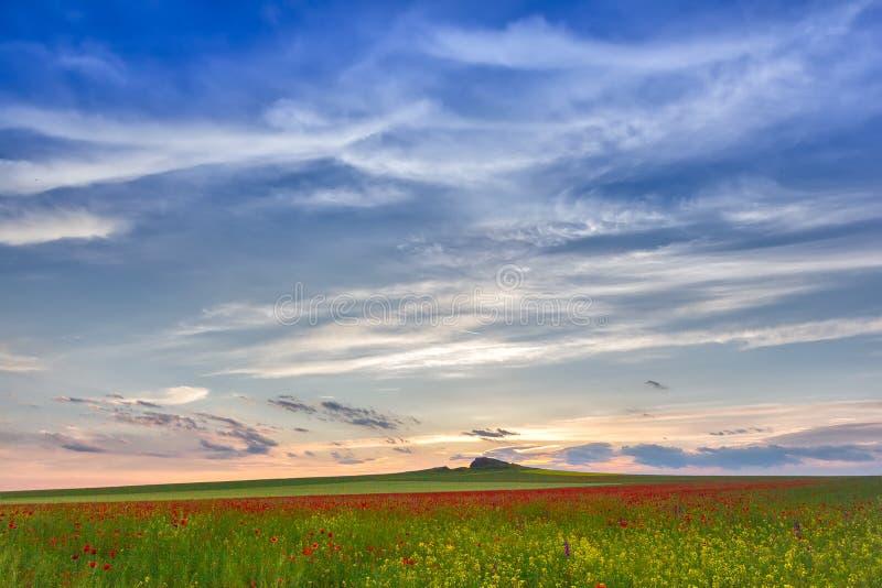 Schöner Sonnenunterganghimmel mit weißen Wolken über einem grünen Sommerfeld mit Mohnblumen lizenzfreies stockbild