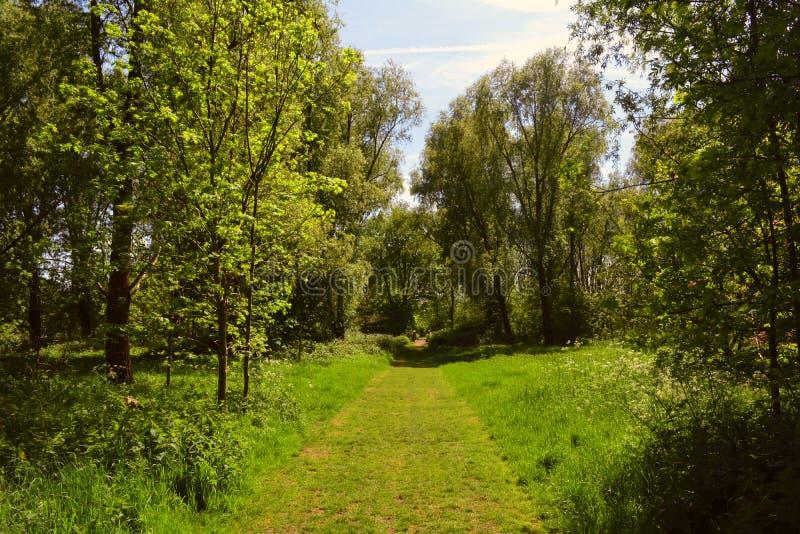 Schöner sonniger Gehweg im Wald/Waldim frühjahr/Sommer, Waltham-Abtei, Großbritannien lizenzfreie stockbilder