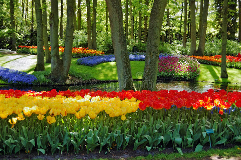 Schöner sonniger Morgen an den Keukenhof Gärten lizenzfreie stockbilder
