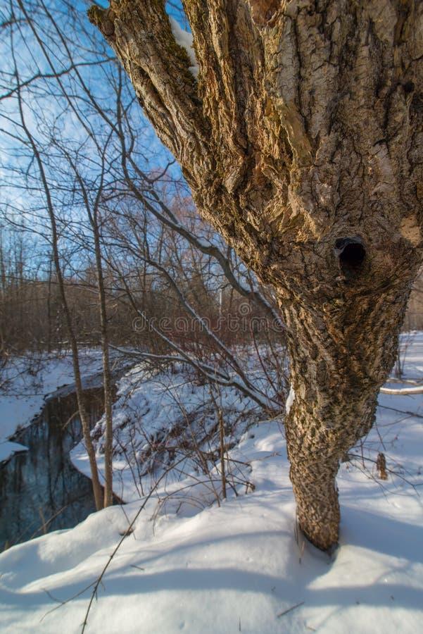 Schöner sonniger Tag des verschneiten Winters auf Wanderweg weg von einem kleinen Nebenfluss nahe Zustands-Fisch-Brutplatz-Besuch stockfotografie