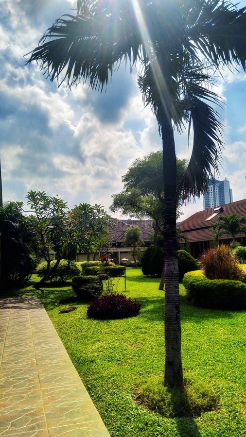 Schöner sonniger Tag innerhalb des Krankenhaus-Gartens stockfotos