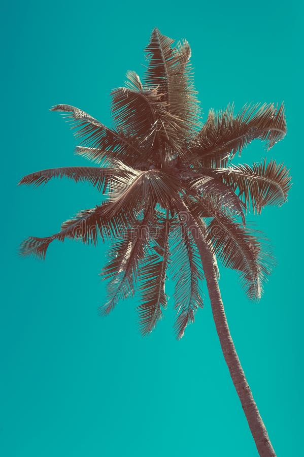 Schöner sonniger Tag in Tropen mit Palme stockbilder