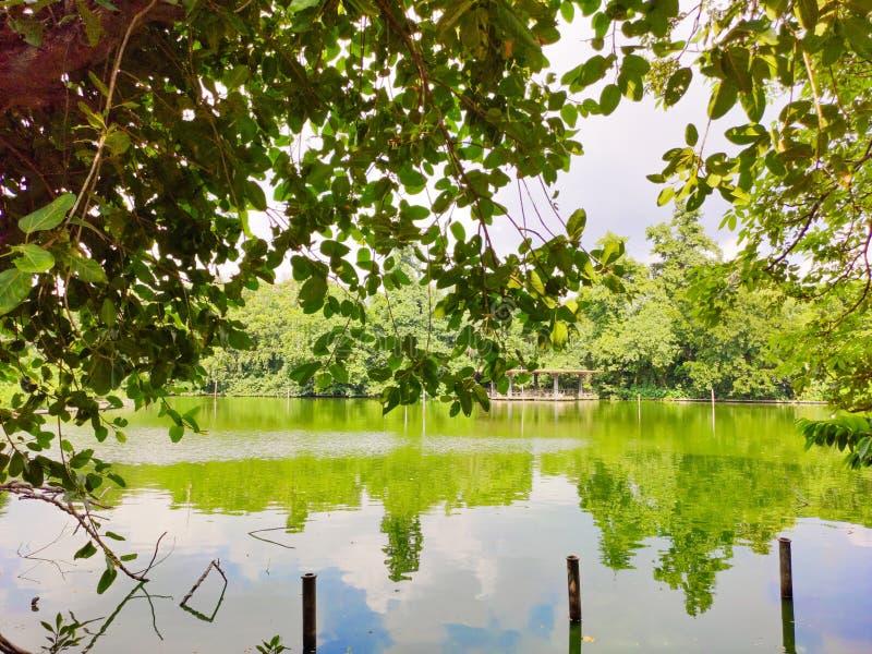 Schöner stabiler See bedeckt mit Baum lizenzfreies stockbild