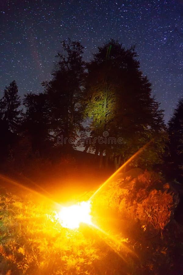Schöner sternenklarer nächtlicher Himmel, die Milchstraße über Sommerbäumen lizenzfreie stockfotografie