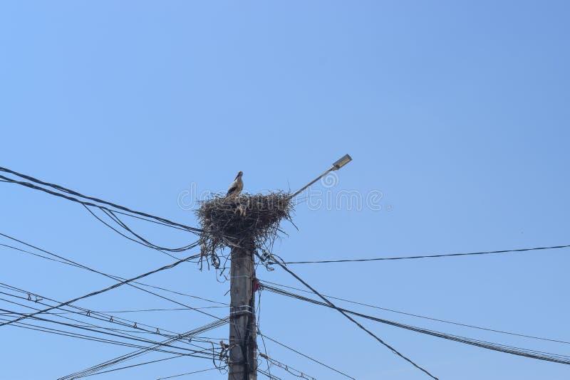 Schöner Storch in ihrem Nest auf der Stromsäule gegen den blauen Himmel stockbild