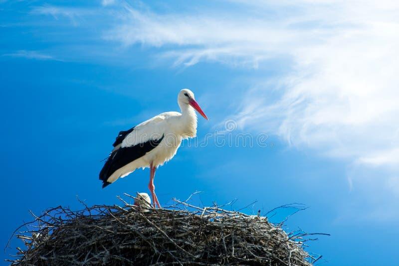 Schöner Storchstandplatz auf dem Nest lizenzfreie stockfotografie