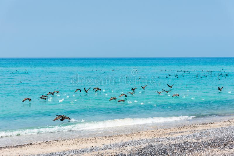 Schöner Strand gedrängt mit Vögeln stockfotos