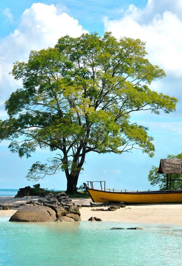 Schöner Strand mit großem Baum und Boot lizenzfreie stockfotos