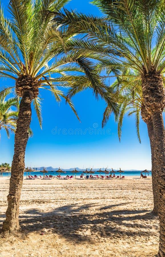 Schöner Strand Spaniens Mallorca mit Palmen bei Alcudia lizenzfreie stockfotografie