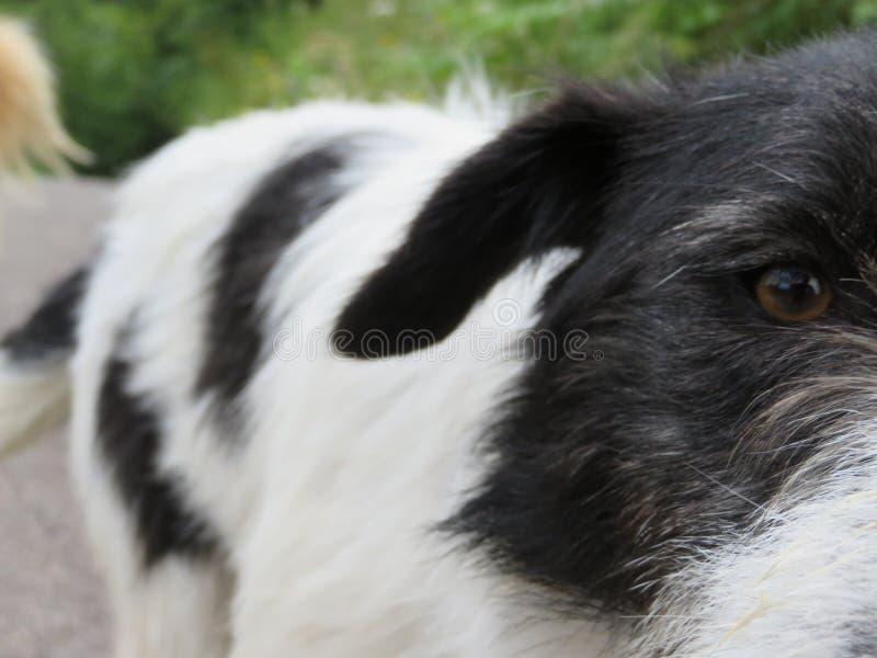 Schöner streunender Hund, der die Kamera nach Foto betrachtet lizenzfreies stockfoto