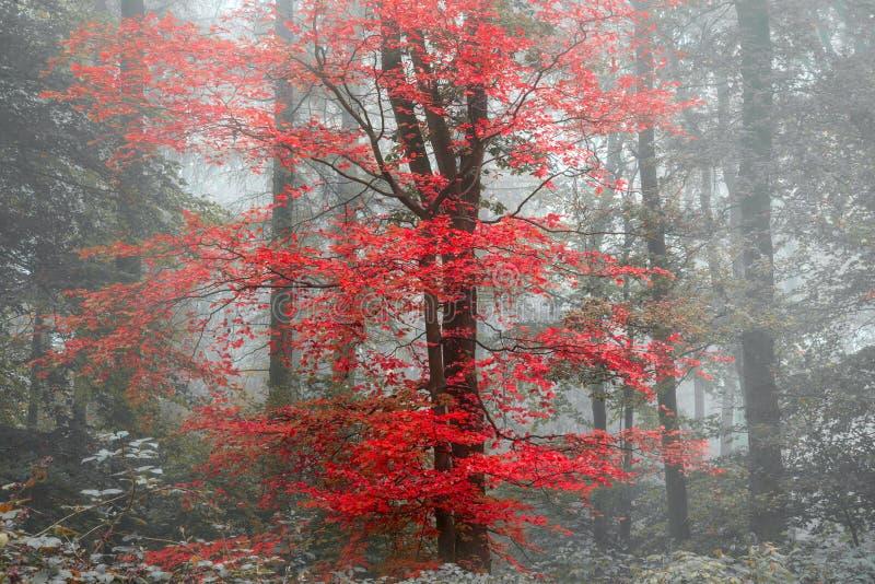 Schöner surrealer abwechselnder Farbphantasie Autumn Fall-Waldlan lizenzfreie stockfotos