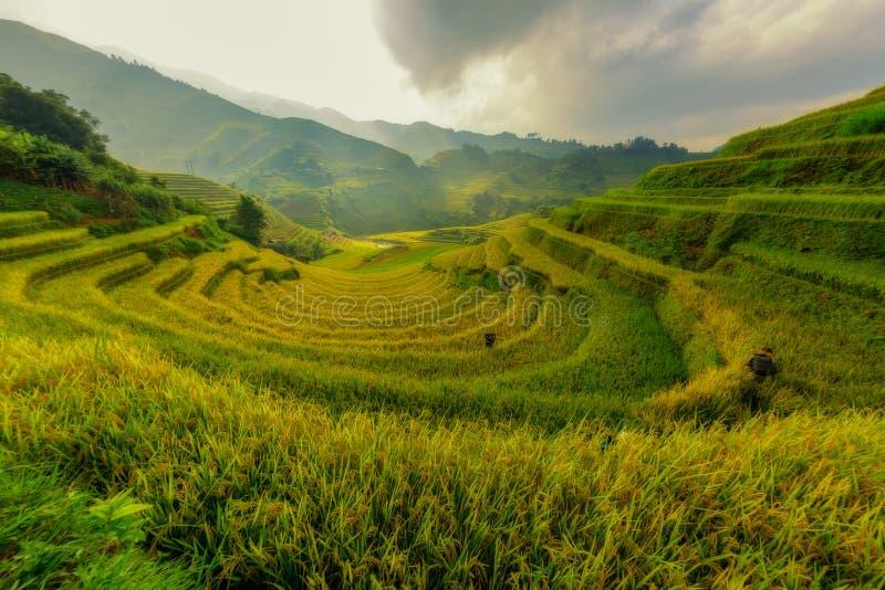 Schöner terassenförmig angelegter Reis MU Cang Chai Vietnam The lizenzfreies stockfoto