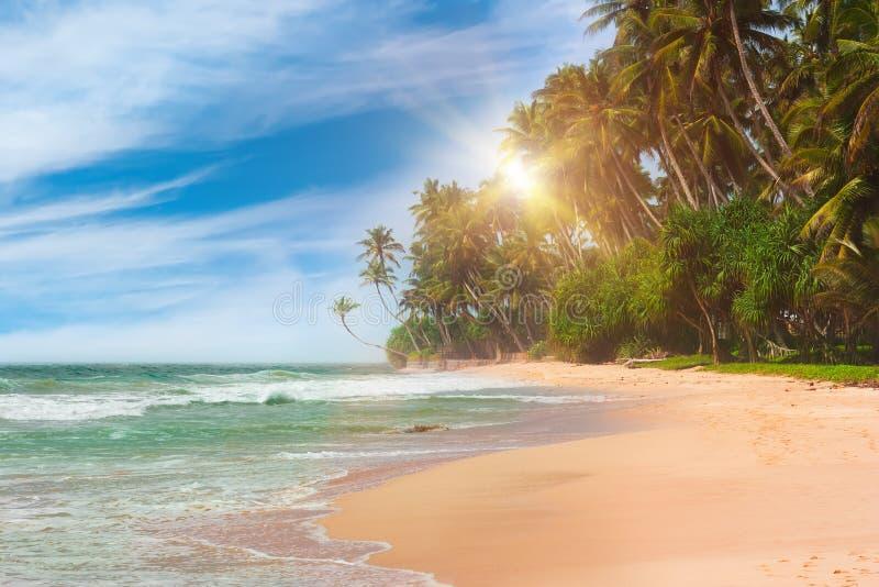 Schöner tropischer Strand mit palmtrees lizenzfreie stockbilder