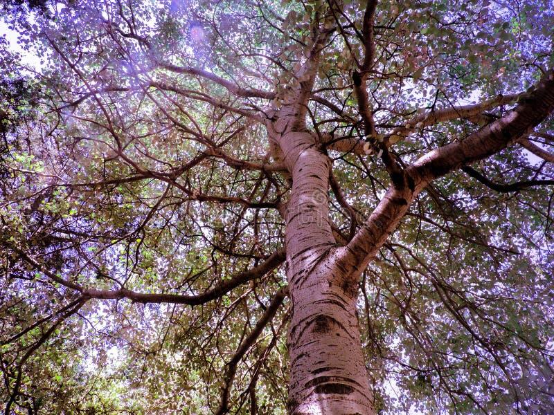Schöner und hoher Baum in einem Park stockbild